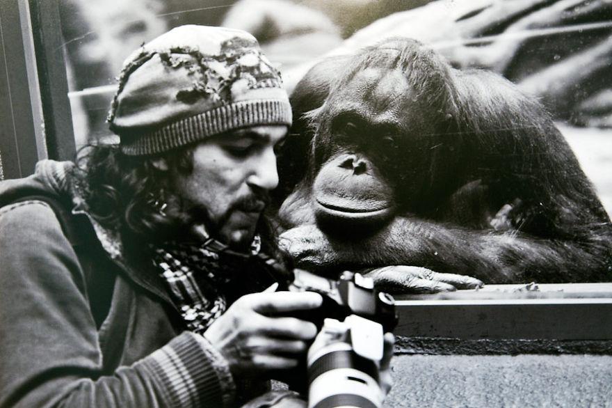 nature photographers 11 gorilla chimpaanjee