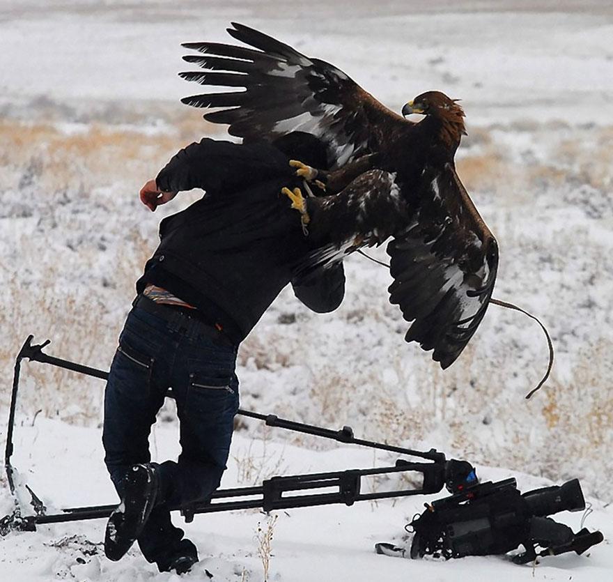 nature photographers 29 eagle hawk