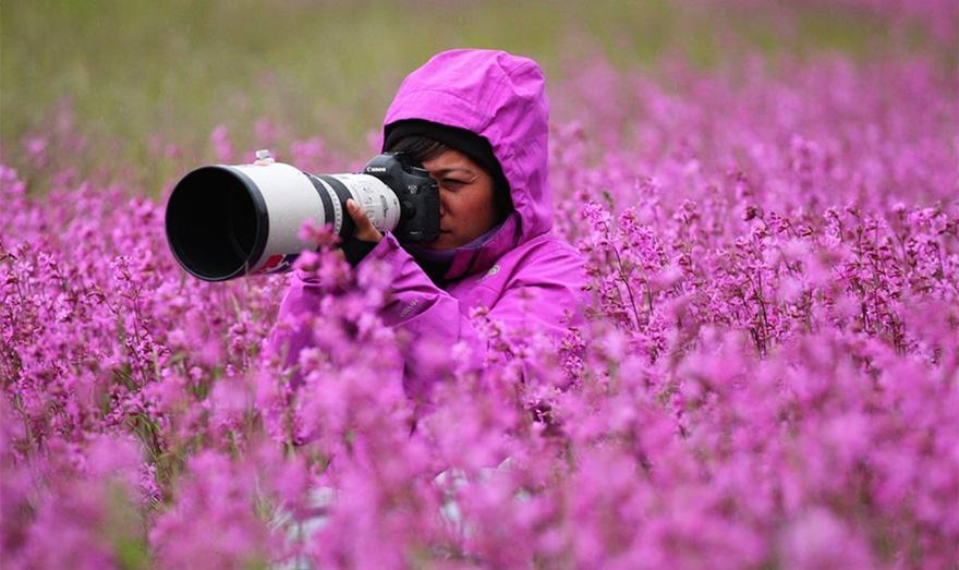 nature photographers flowers