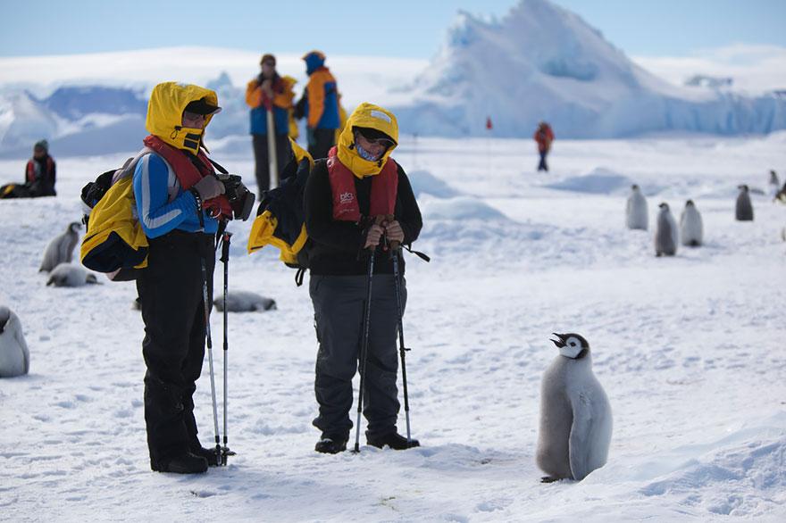 nature photographers penguins