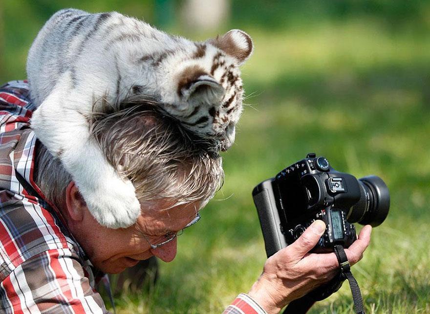 nature photographers31 white tiger